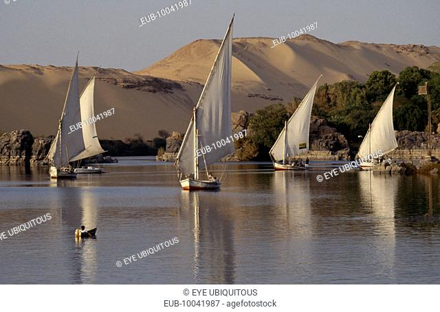Feluccas sailing on the Nile