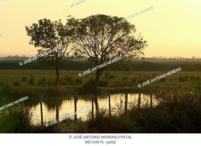 Dawn at Camargue, Gard, Languedoc-Roussillon, France