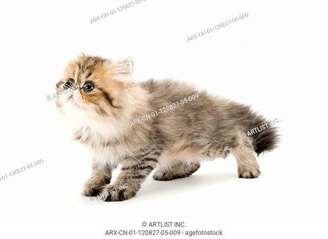 A kitten looking left