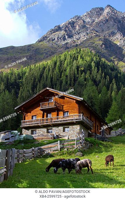 Pastures of high altitude Oberstalleralm, Innervillgraten, Austria
