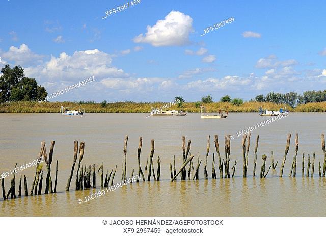 Guadalquivir river. Doñana National Park. Huelva province. Andalusia. Spain