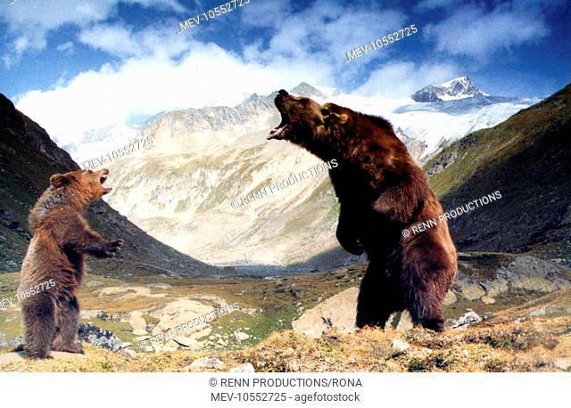 THE BEAR [FR / US 1988] aka L'OURS THE BEAR