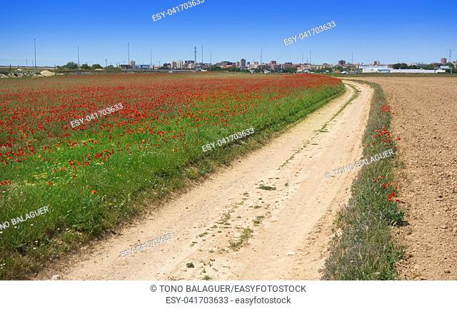Spring meadow poppies at Camino de Santiago Levante Saint James Way at Castile La Mancha