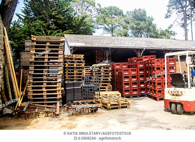Wood pallets piled up together and messy in a factory of cider. Many red plastic bins are awaiting to be filled and taking by the small white and red tractor