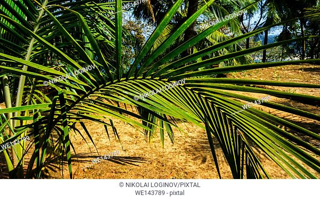 Horizontal curved palm tree composition