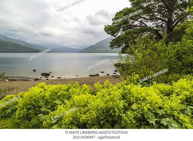 Loch Lochmond at Balmaha in Trossachs national park, Scotland