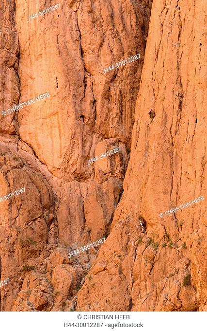 Morocco, Moroccan, rock climbing in the Todra gorge, North Africa, Africa, African