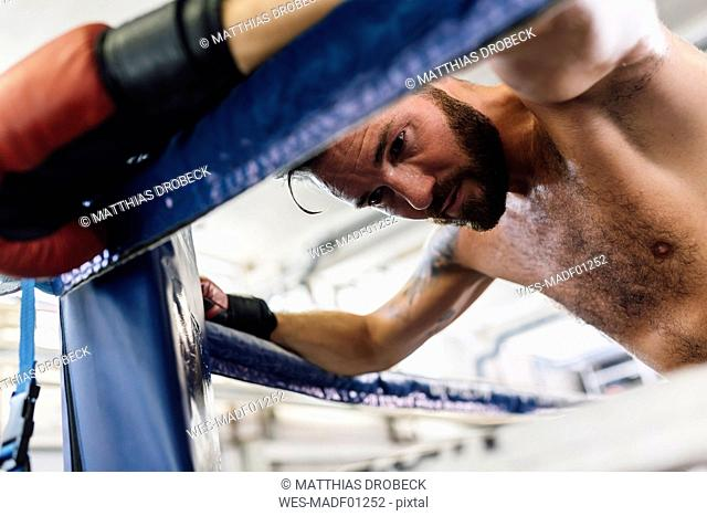 Boxer resting in boxing ring