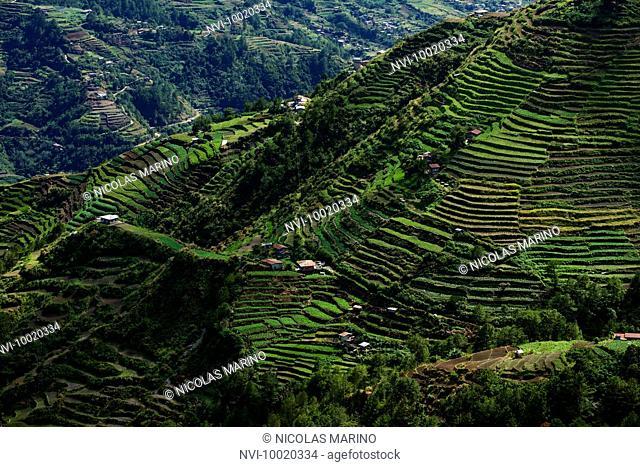 Rice terraces of the Cordillera, North Luzon, Philippines