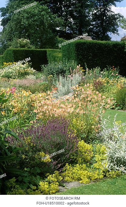 Lavender and pastel orange alstroemerias with alchemilla mollis in summer garden border at Jenkyn Place