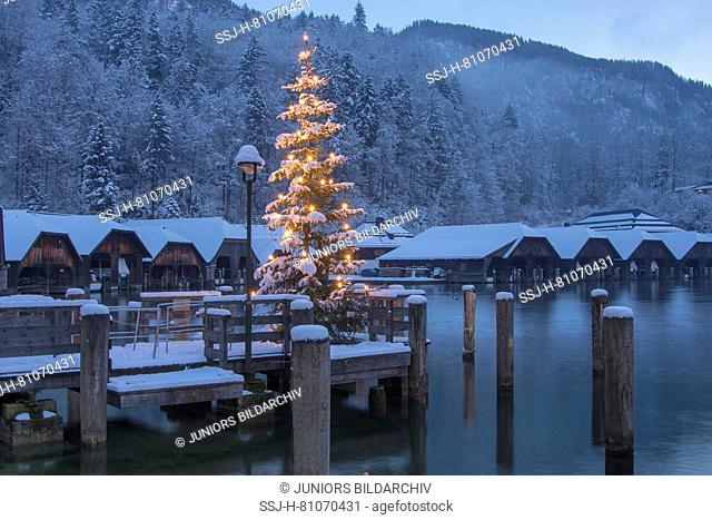 The shining Christmas tree at the Seelaende at the lake Koenigssee with boat huts in the background. Berchtesgadener Land, Bavaria, Germany