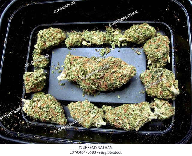 Medical Marijuana Plant Detail and Pattern Background