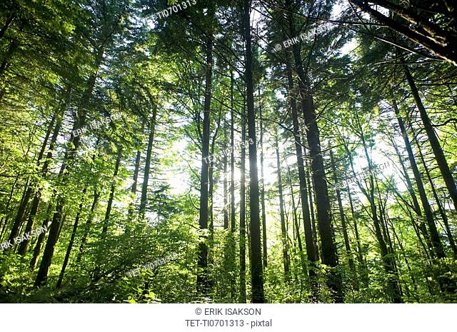 Low angle view of forest