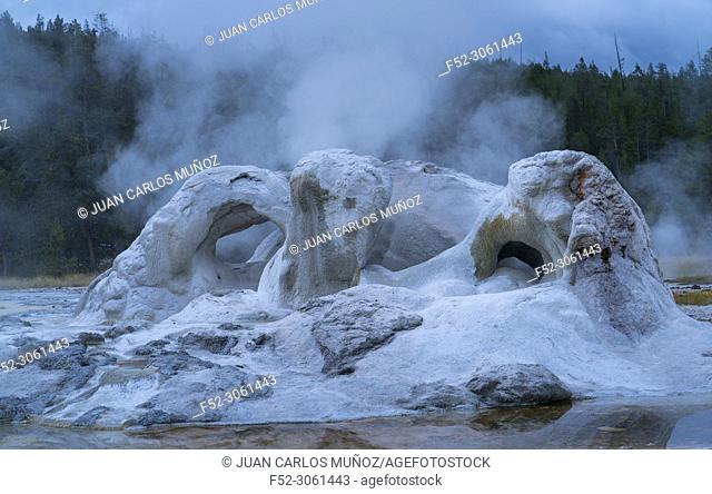 Grotto geyser, Upper Geyser Basin, Yellowstone National Park, Unesco World Heritage Site, Wyoming, Usa, America