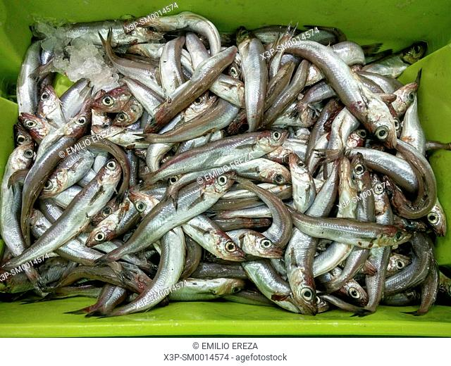 Whiting. Fish for sale