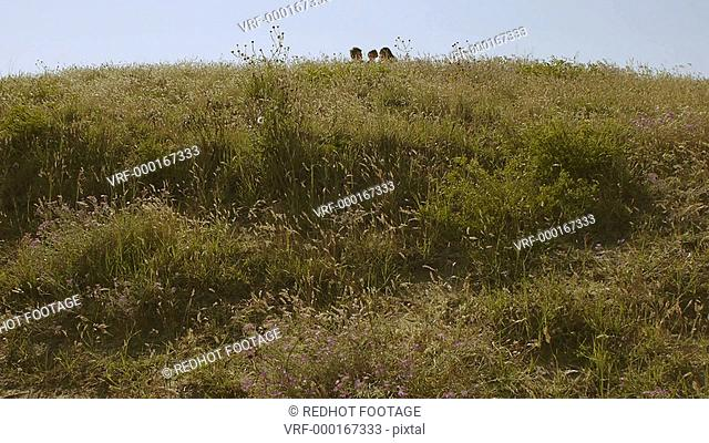 Wide shot of family walking through meadow, Marbella region, Spain
