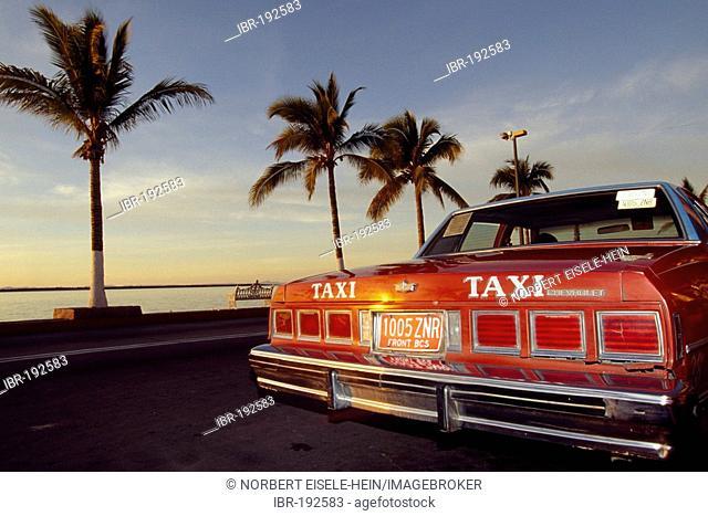 Taxi, Palmen, Baja California, Mexico