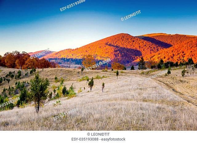 Majestic colorful landscape with sunny beams at mountain valley. Natural park. Dramatic morning scene. Red autumn leaves. Carpathian, Ukraine, Europe