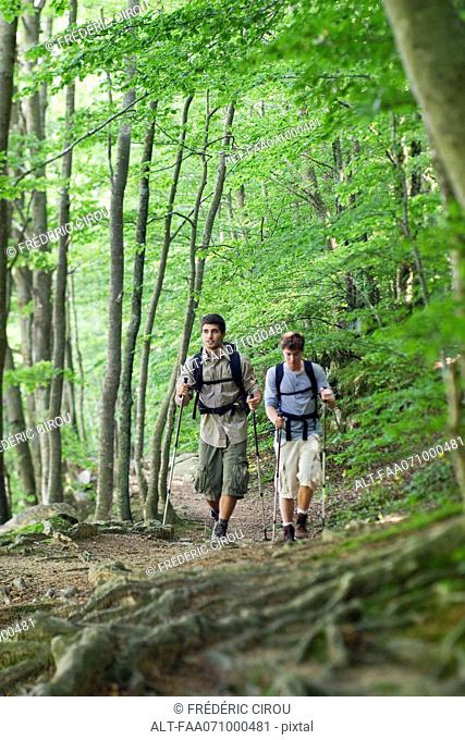 Young men hiking together in woods