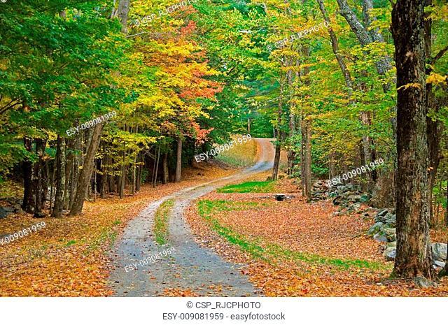 Gravel road through autumn woods