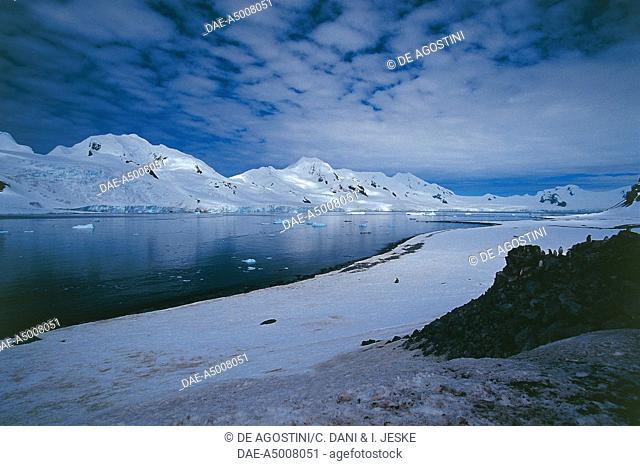 Antarctica - South Shetland Islands. Half Moon Island