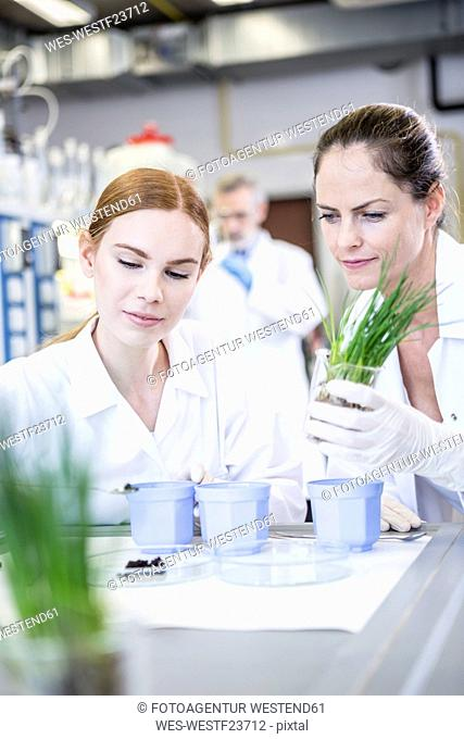 Scientists in lab examining plants and soil sample