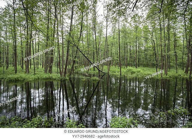 Bialowieza National Park. Bialowieza, Podlaquia, Poland, Europe
