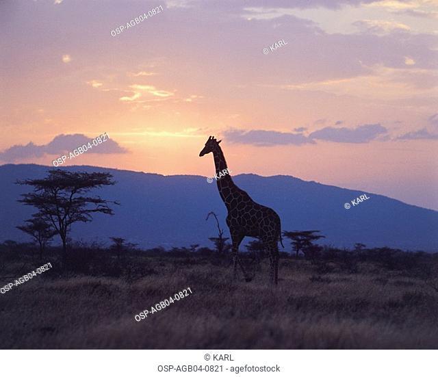 Photo illustrated, animals