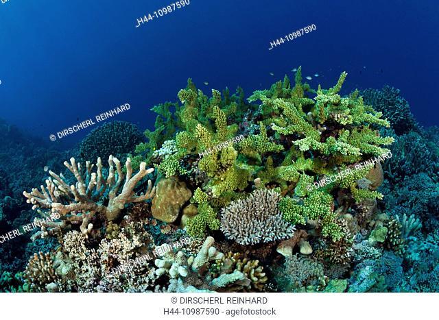Hard Coral Reef, Marovo Lagoon, Solomon Islands