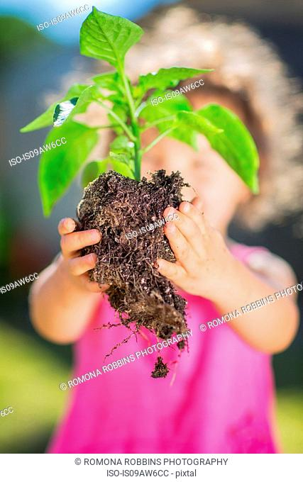 Young girl in garden, holding plant, reading for planting, close-up