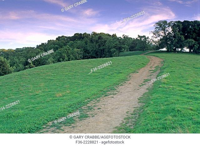 Hiking Trail through green grass on hill in Spring, Briones Regional Park, Contra Costa, California