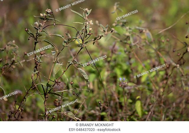 Close up of weeds growing in a dry autumn field