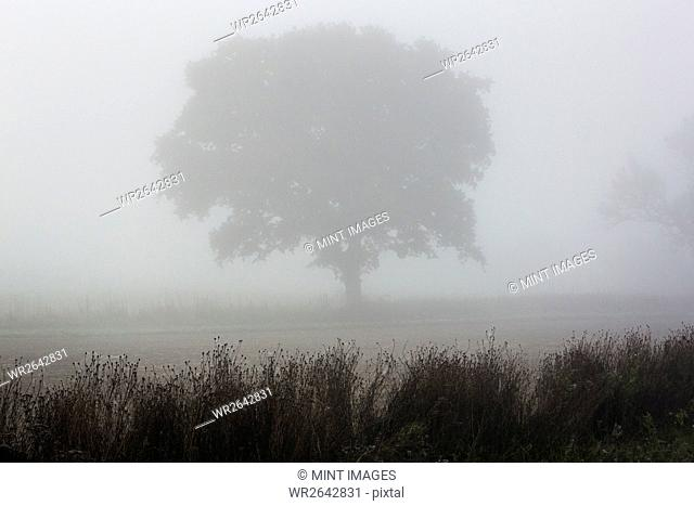 A single tree standing shrouded in mist