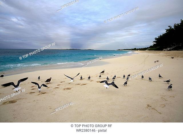 North America the Bahamas birds