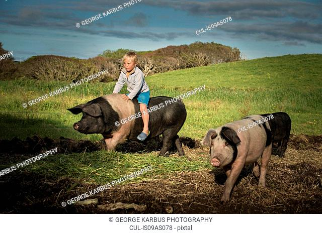 Young boy riding large pig on hillside