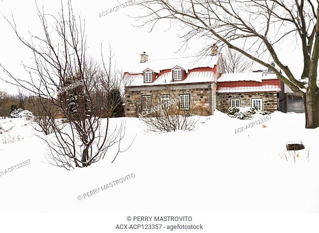 Old 1838 Canadiana assorted coloured fieldstone cottage style home with red sheet metal roof framed by a Malus columnaris 'Maypole' - Crabapple tree and Juglans...
