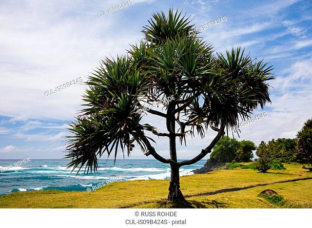Coastal landscape and Indian Ocean, Reunion Island