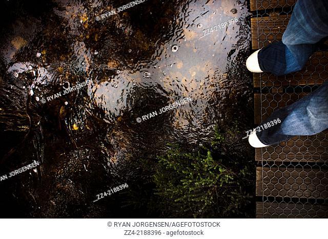 Wet feet of a bushwalker man standing on a rainforest boardwalk, photo taken Cradle Mountain, Tasmania, Australia