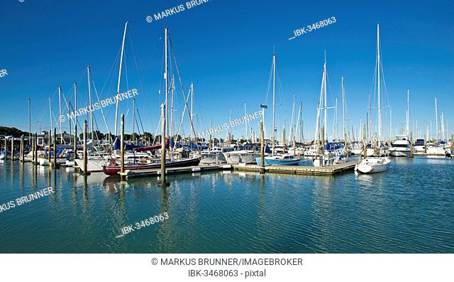 Boats in the harbour of Bayswater, Central Business District of Auckland and Skytower at the rear, Bayswater, Auckland, Auckland Region, New Zealand