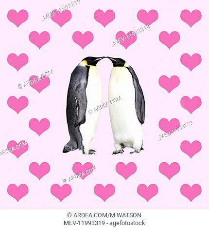 Emperor Penguins, kissing sourounded by hearts