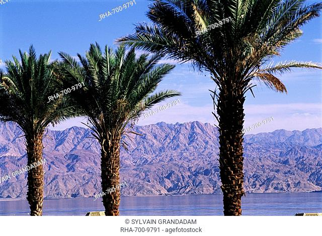 Palm trees and Red Sea, Eilat, Israel, Middle East