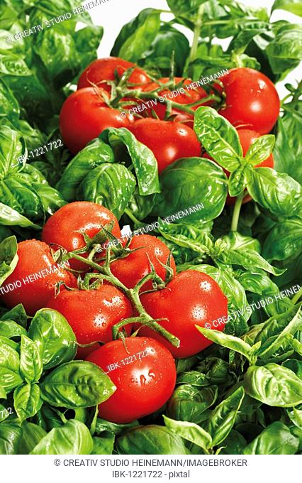 Tomatoes on basil