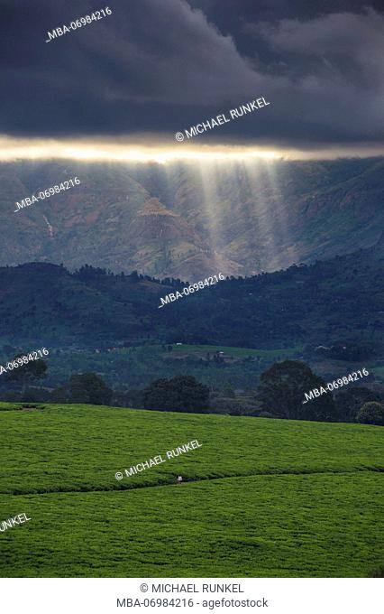 Dramatic coulds over a tea estate on Mount Mulanje, Malawi, Africa