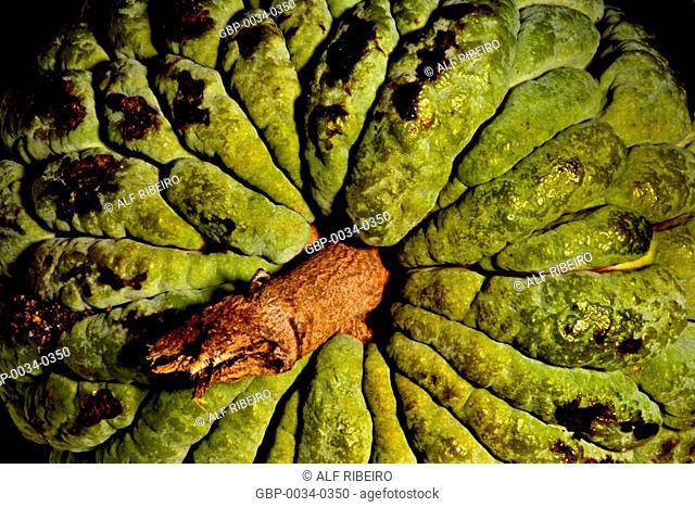 Fruit of Conde; Studio; Sao Paulo-SP; Brazil