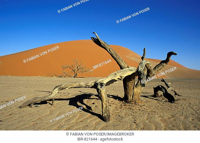 Dead tree lying in front of Dune 45, Namib-Naukluft National Park, Namibia, Africa