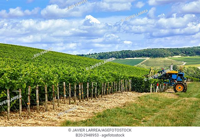 Le Vignoble, Vineyards of champagne, Bar-sur-Seine, Aube, Champagne-Ardenne, France, Europe