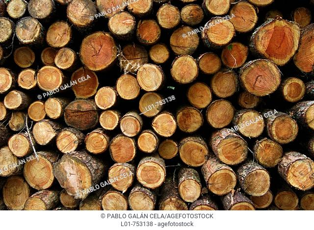 Logs, Señorio de Bertiz Natural Park, Navarra, Spain