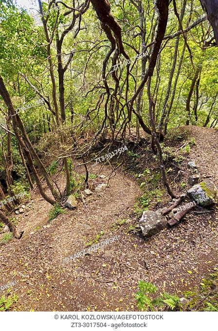 Laurel Forest, Anaga Rural Park, Tenerife Island, Canary Islands, Spain