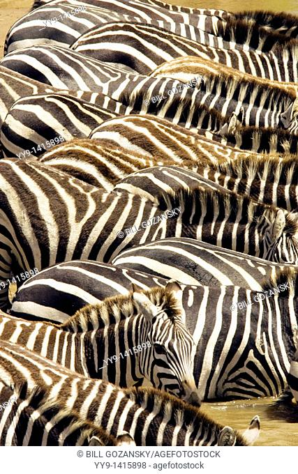 Zebra Patterns - Masai Mara National Reserve, Kenya