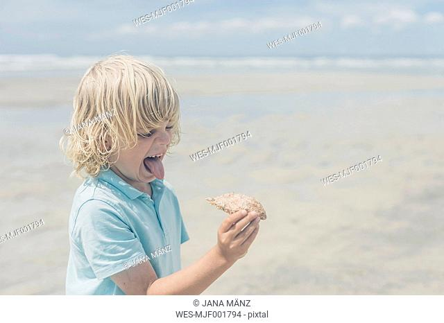 France, Brittany, Finistere, Pointe de la Torche, boy on the beach grimacing and holding crab